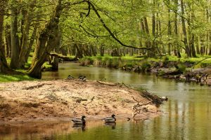 Forest River 2 by landkeks-stock