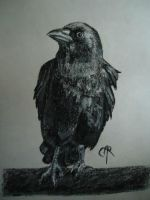 Crow by CreaturesCrater