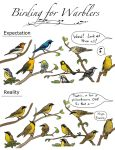 Birding for Warblers by EWilloughby