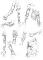 Arm Muscle Studies 01 by protowilson