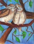 owlets by McCoy92