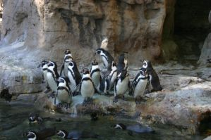 St Louis Zoo 02 by shadowgirls-stock