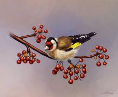 Goldfinch by JuliaChu