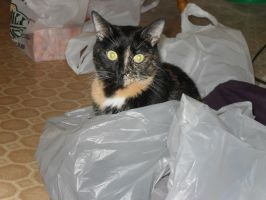 Kitty in the Bag by MyLoveForYouEternity