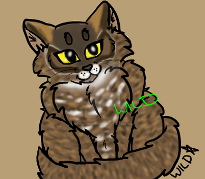 I made cat adopts based on owl markings by Wild--Star