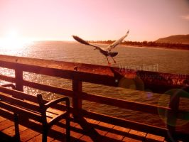 seagull sunset by RiotLife
