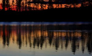 The Beaver swims quietly in the night by Sparvoga