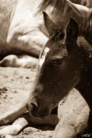 A Navajo wild foal by MCL28