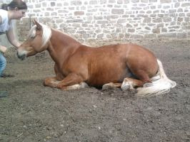 lying Horse sideview Stock by Fabolouse-Stock