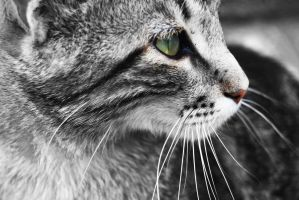 Cat's eye by silya88