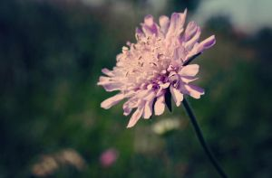 flower by xCatiix