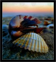 Shells by vissare
