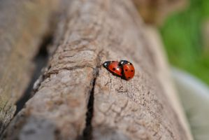 Ladybugs by sophhks