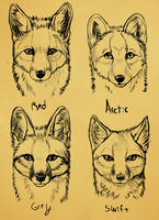 Summer North America Fox faces by VengefulSpirits