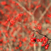 Red_autumn by wojtar