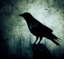 The Crow by nairafee