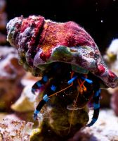 Hermit Crab by thereisnoband