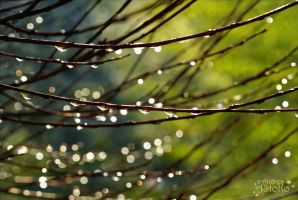 After the rain 1 by AStoKo