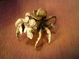jumping spider by palaeorigamipete