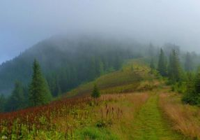Romanka in the fog - 1366 m n.p.m by miirex