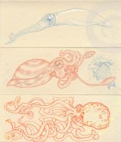 Three cephalopods by oktopussy