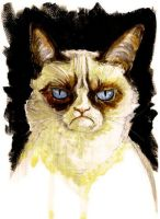 Grumpy cat. No. by sarahwilkinson