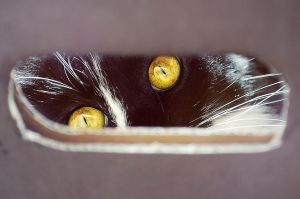 Cat eyes by Tamerlana