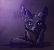 Randome Purple CAt by Bueshang