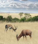 Once Upon a Time in Kenya - 2 by BenHeine