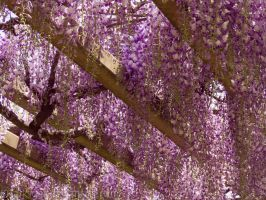 Wisteria in the art museum III by larksgar