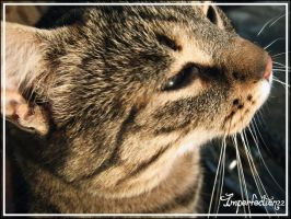 23. Cat by Imperfection22