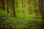 Forest 7 by Lakela