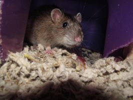 Renny's hideout - Close up by The-Bryce-Is-Right
