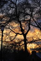 Burning Tree Sunset by froggynaan