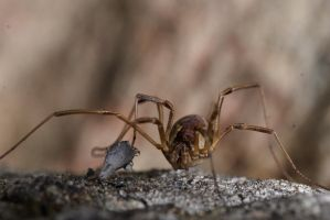 Another spider by WolfsbeRoses