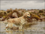 III. Another Golden Retriever by adeina by Fera1029