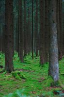 Enchanted Forest by schattenlosefotos
