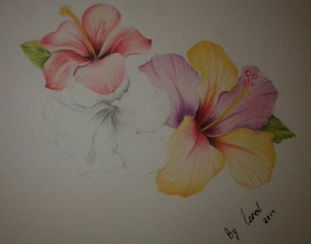 50 shades of hibiscus by caytindo