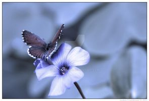 butterfly 01 by negromante