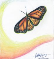 Monarch Butterfly by ColourChromaticism