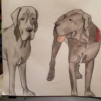 Teal'c my great dane by woofinfinity