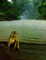 The Last Monkey In Lost Land by anugerah-ilahi