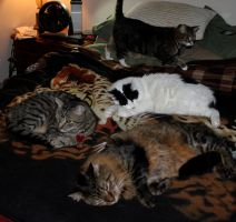 Cats On My Bed 2 by edwardvb