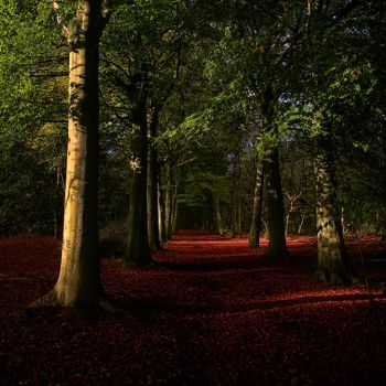 Red Carpet by RobinRoels