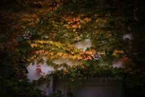 Autumn Leaves, Summer Flowers by planet0