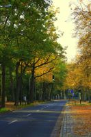 Autumn streets by dmakreshanski
