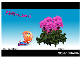 Sony Bravia Poster - Flowers by simayiboy