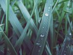 striped drops by Pettasd