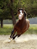 Speed by Melli81
