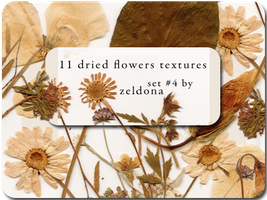 11 dried flowers textures by mellowmint
